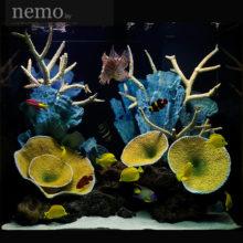 Купить кораллы как на фото