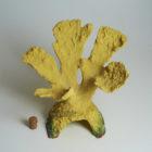 Коралл желтый для аквариума