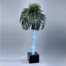 Аква пальма