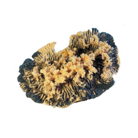 Коралл для оформления аквариума в стиле псевдоморе