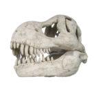 Череп тираннозавра для художественного оформления аквариума