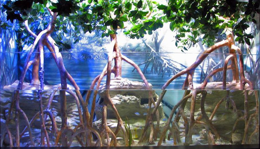 Мангровые деревья в аквариуме