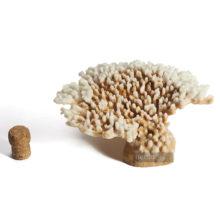 Коралл стол