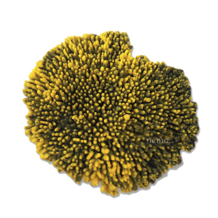 Коралл Table
