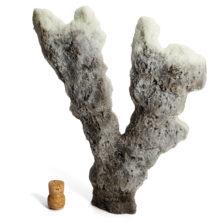 Коралл для оформления, лосиный рог