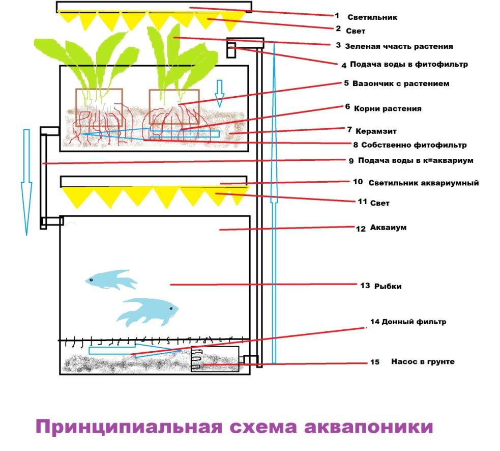 аквапоника схема