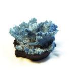 Коралл голубой вельвет