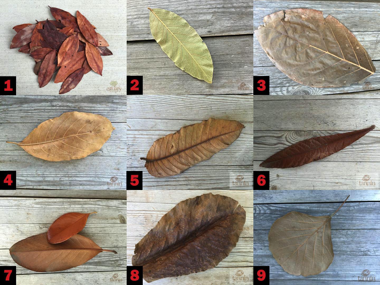 листья которые можно использовать в аквариуме