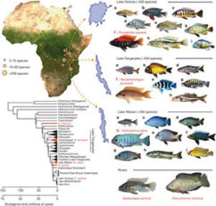 биотоп малави