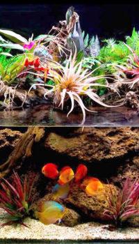 Какие растения для палюдариума