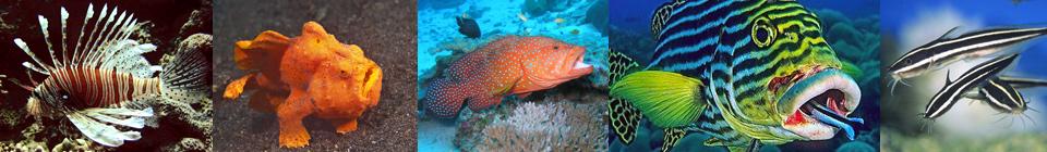 Хищники как таковые требуют обширных знаний в области правильного питания, в противном случае Вы через некоторое время заметите, что в аквариуме поубавилось рыб