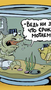 Рыбки в неволе