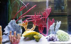 Диодное освещение в аквариуме