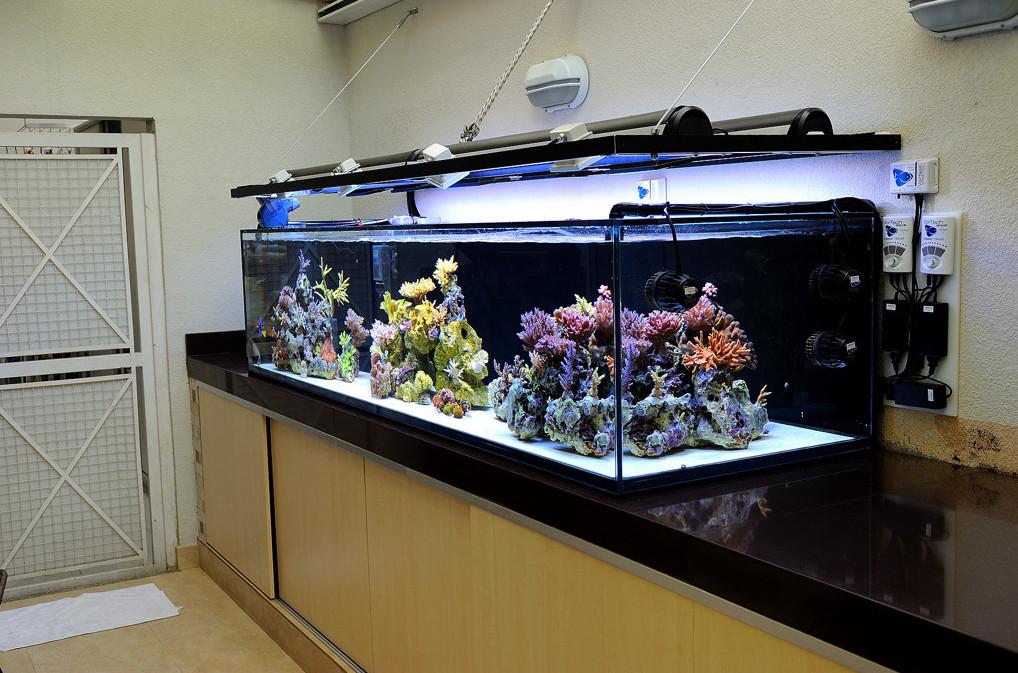 Перспектива в аквариуме