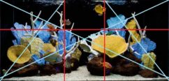 Золотое сечение в морском аквариуме