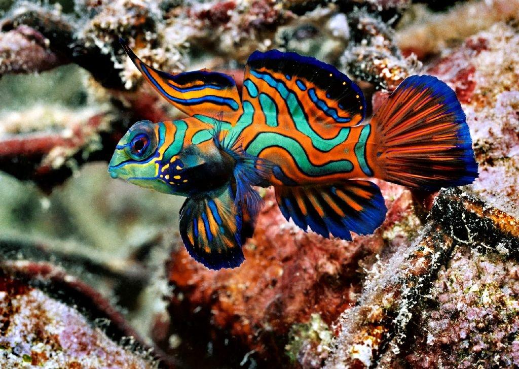 редкие рыбы с картинками хотите отдохнуть национальной