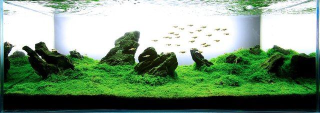 Белый фон в аквариуме