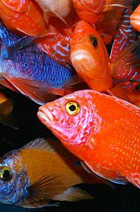 Сколько рыб можно держать в аквариуме
