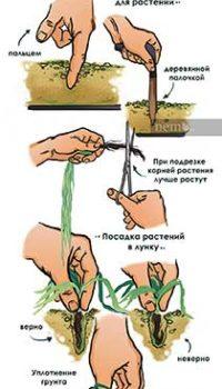 Расстановка аквариумных растений