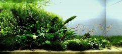 Золотое сечение в аквариумной композиции