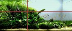 Золотое сечение в аквариуме