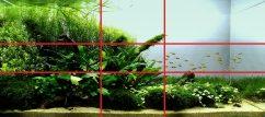 Золотое сечение в оформлении аквариума 02