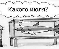 Как поступить с аквариумом уезжая в отпуск?
