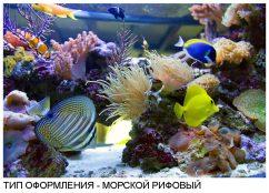 Тип оформления морской рифовый