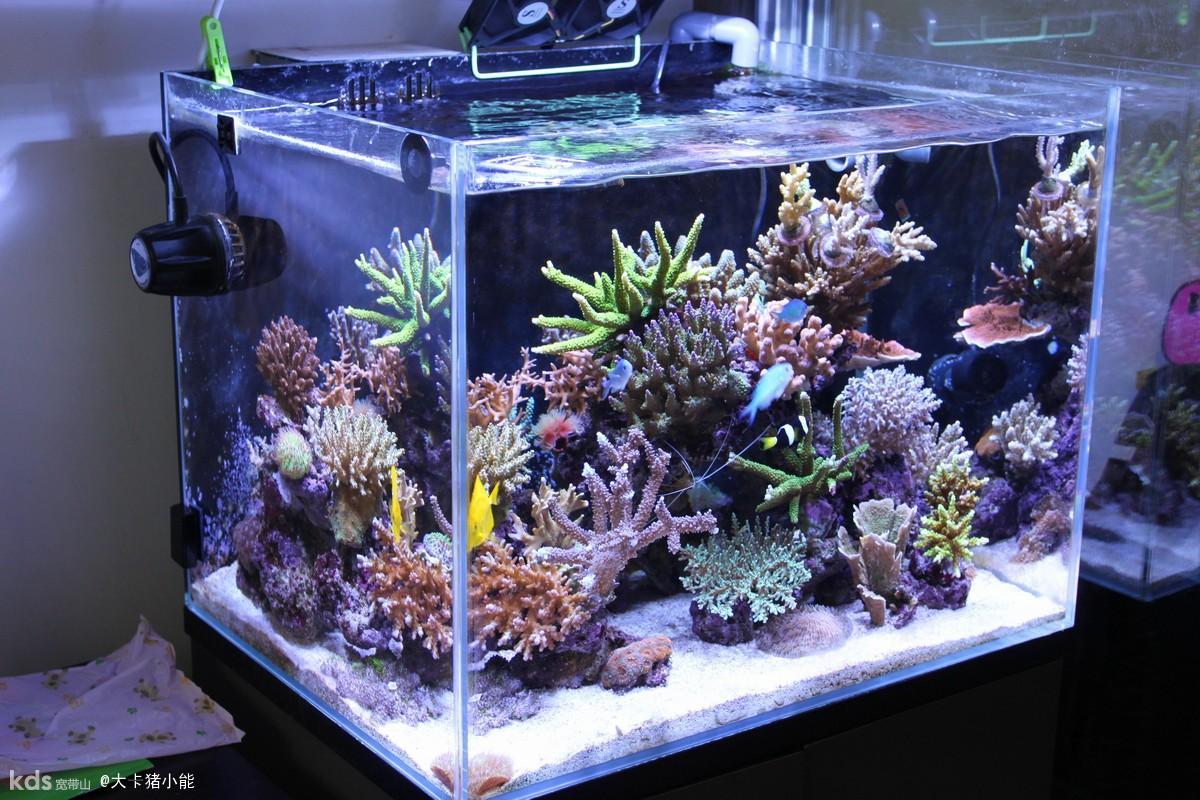 Нана аквариум