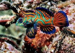 Яркие морские рыбки