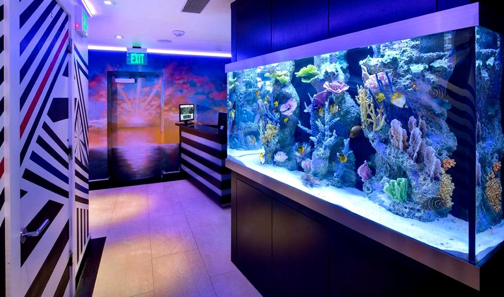 Холодный спектр присущ аквариумам с коралловым рифом