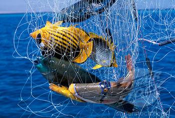 Действительно, проблема вовсе не в аквариуме, а в самих рыбках, точнее в соли цианисто-водородной кислоты, более известной под названием синильной кислоты или просто цианида
