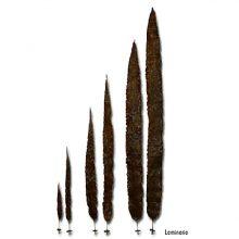 Высокие растения для аквариумов. Ламинария