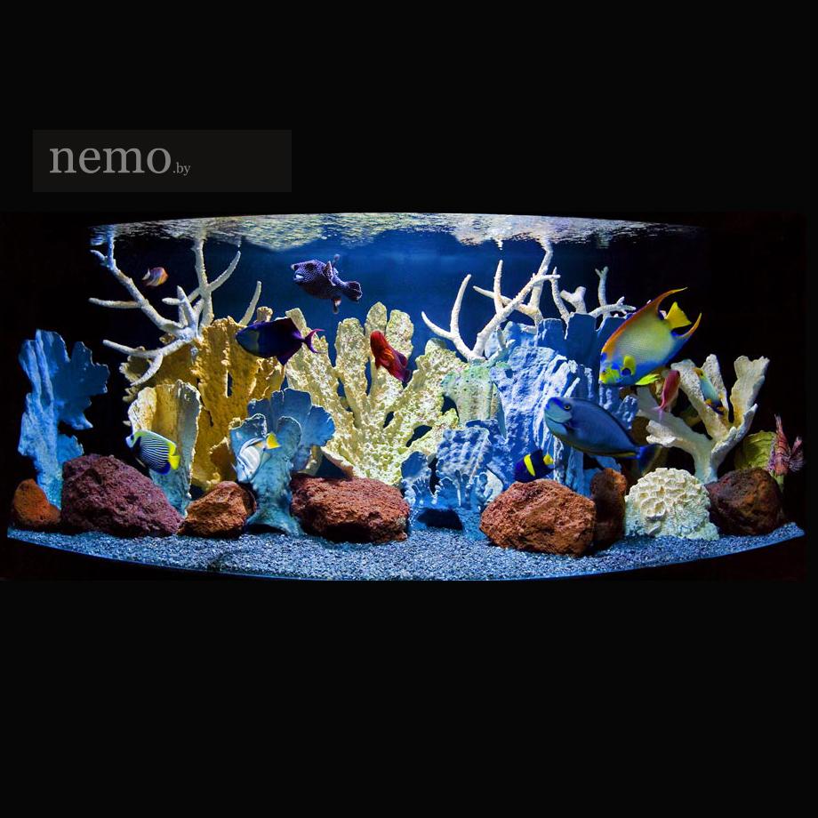 Кораллы как на фото купить