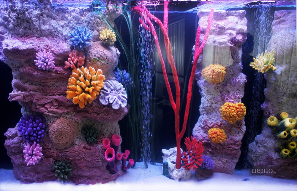 Псевдоморе с кораллами