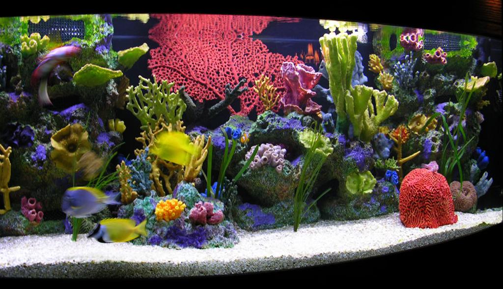 Кораллы фото и цены