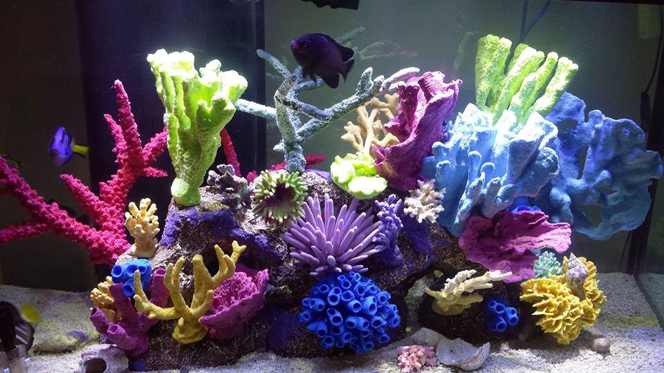 Фото кораллов в аквариуме