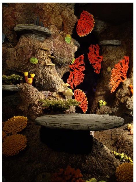 Горгонарии в оформлении аквариума