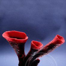 Искусственный коралл красная губка