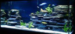 Синий фон в аквариуме