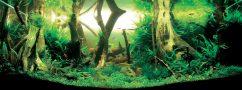 Мировой рейтинг: 27 лучших природных аквариумов 2008