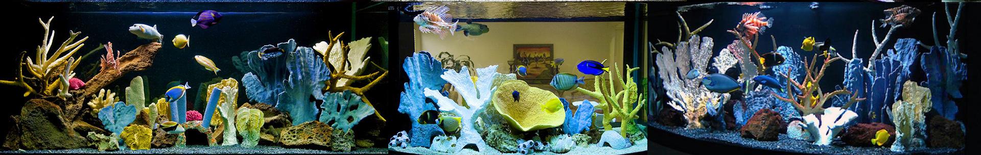Искусственный коралловый риф пример оформления