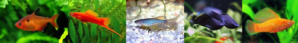 Совместимость аквариумных рыбок группа 2