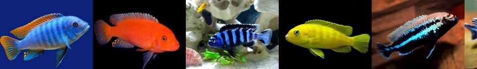 Совместимость аквариумных рыбок группа 7