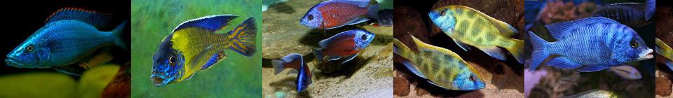 Совместимость аквариумных рыбок группа 8