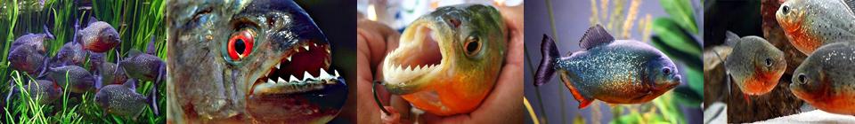 Совместимость аквариумных рыбок группа 10
