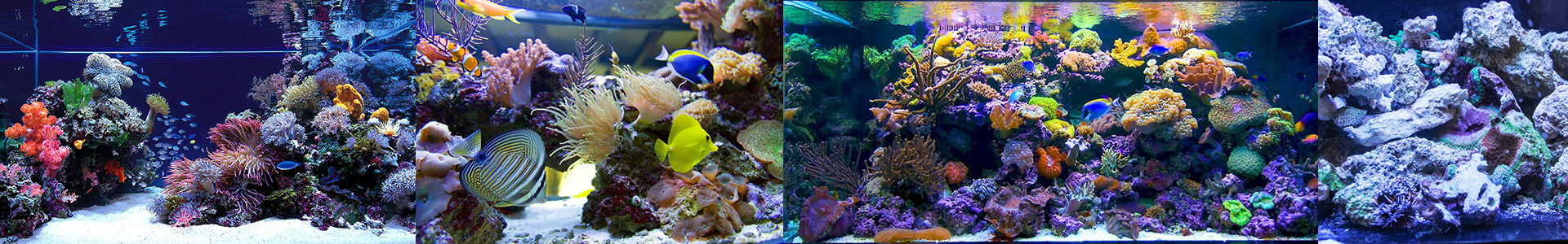 Настоящий рифовый аквариум