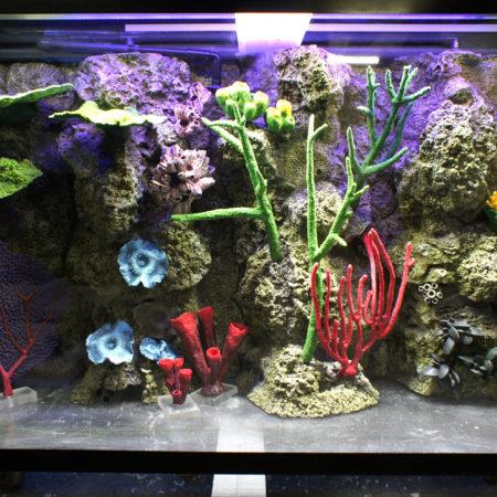 Коралловый риф в аквариуме