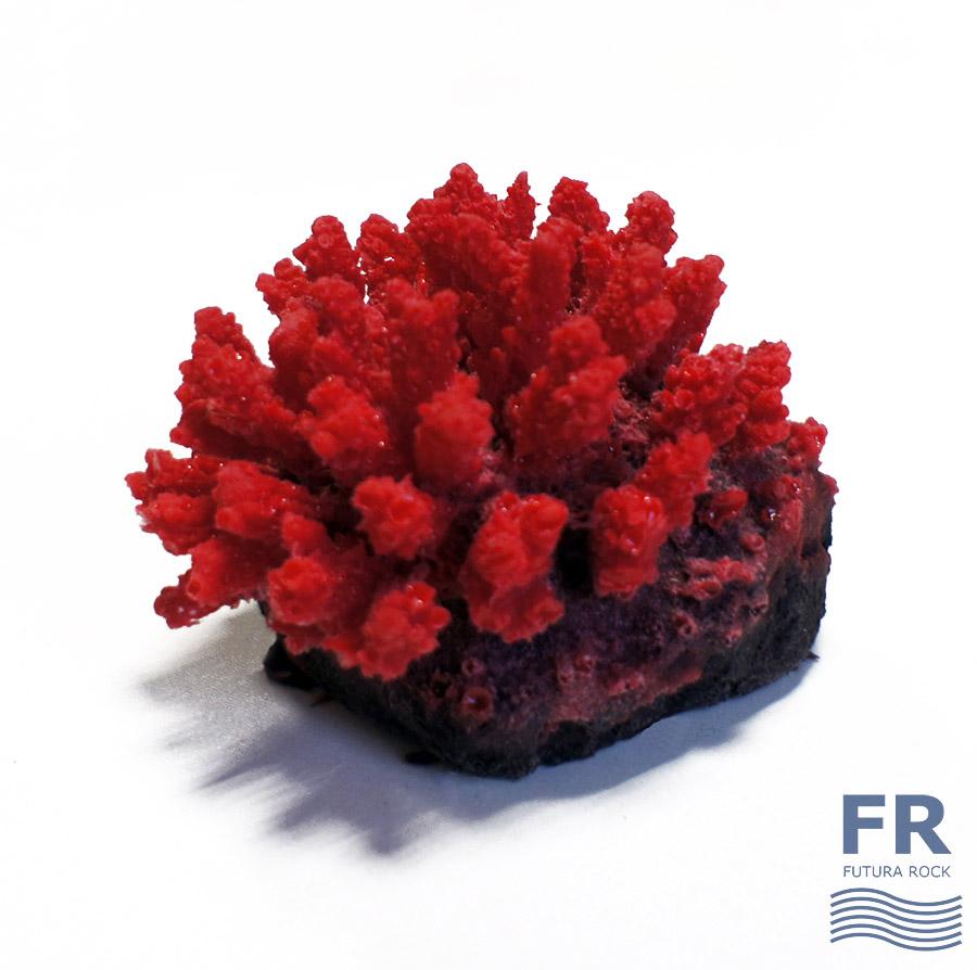 Мини коралл