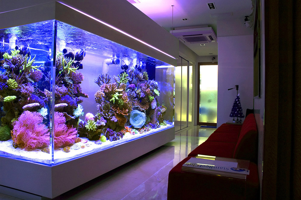 Большой аквариум в маленькой комнате